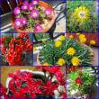 ベランダの花達