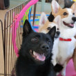愛犬の口腔ケアについて考えよう(*^-^*)  犬のしつけ教室@アロハドギー