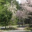 春です!!