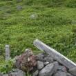 登山(北海道百名山 その3 羅臼岳)