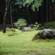 20日の散歩 ( 今宮神社往復で夏だより )