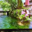 ノルディックで行った大阪自然大学課外授業:滋賀県米原町醒井