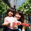 【イベント】くわの農園いちご狩り×ミニライブ