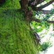 台風の中の観光  − 高島城