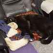 黒猫3態 佐久高原のコスモス