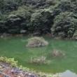 16日の散歩で小さなダム湖を見に寄ってみました。