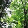 山岳点景:夏の森、休日に