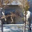 多摩動物公園で Ⅴ