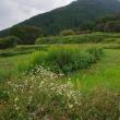 金剛葛城山系の山裾をバイクでお散歩
