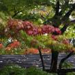 17年10/17~木曽町~紅葉情報~③