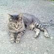 10月13日(土)のつぶやき 今朝も違う猫が寄って来た!なぜ逃げない?(笑)