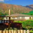 芦ノ湖周辺の紅葉状況