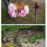 ■【カシャリ! ひとり旅】43京都府 勧修寺19 氷室池