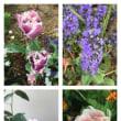 庭の花とミュウ