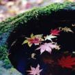 神社仏閣の紅葉