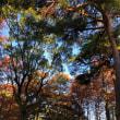 別府公園の落ち葉