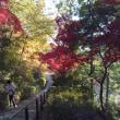 多摩川の紅葉