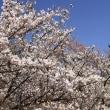 誠に申し訳ありませんが、ブログ「京の四季」の更新を休止しています。