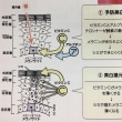 プラスCピコセラム (No.4)
