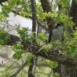 鳥撮りに行ってきました