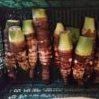 [275]京芋収穫