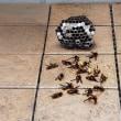 蜂に狙われた我が家!