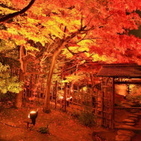 白鳥庭園【愛知県名古屋市】