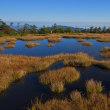 草紅葉と池塘