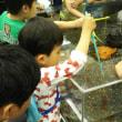 金魚とチョウチョとカルガモ一家