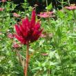 にぎやかな植物たち