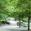 香嵐渓の青モミジ その2
