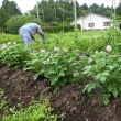 庭の草取りと剪定