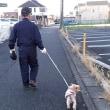 パパとテディくんの散歩姿を撮影してきました。