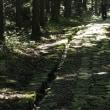 萩往還の山道を歩きました