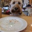 ティファニーで朝食?