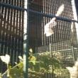 円山動物園 選りすぐり写真(・∀・)♪