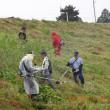 五十嵐川を愛する会が主催した五十嵐川堤防草刈り事業に参加