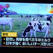 10/22 関東の酪農 放牧の良さ