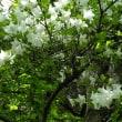 平成30年5月21日(月) 菖蒲ケ浜~千手ケ浜で花見♪