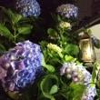 シャンソン歌手リリ・レイLILI LEY 水曜日の雨 木曜日の五月晴れ そして 六月のオルタンシア紫陽花が雨に濡れる