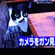 12/9 土曜のシムラで見た猫 しゃべる? 顔がはっきり写って