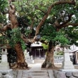 北鎌倉から鎌倉までブラブラ・・道路脇の花