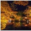 醍醐寺 ライトアップ