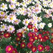 入学式のお花     離任式のお花