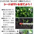 ジャガイモの実生種子、明日からプレゼント