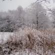 大雪警報 ②