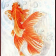 色鉛筆画370 (金魚)