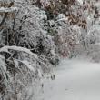 今年も大雪の予感
