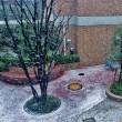 雪の降り始め。