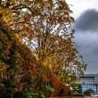 役場の秋景色